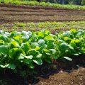 大原野食育体験ツアー~親子で野菜収穫&料理体験~